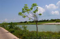 Playa Mujeres lake area and golf course.jpg