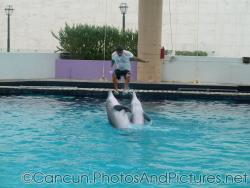 Dolphins perform at the Cancun Interactive Aquarium at La Isla Shopping Village in Cancun.jpg