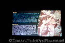 Octopus info at Cancun Interactive Aquarium at La Isla Shopping Village in Cancun.jpg