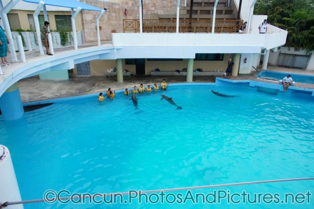 People interacting with dolphins at Cancun Interactive Aquarium at La Isla Shopping Village in Cancun.jpg
