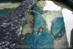 Tropical fish and corals at outdoor pool of Cancun Interactive Aquarium.jpg
