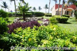 Palm tree and purple tropical plants at Ocean Coral & Turquesa.jpg